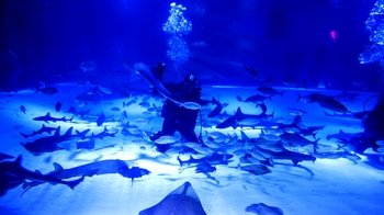 Antalya Aquarium Only with Optional Transfer