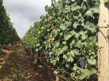 Eugene City & Wine Combo Tour