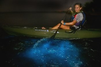 Dinoflagellate Bioluminescence Kayak Tour