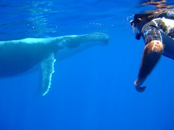 Private Whale-Watching and Swimming Tour in Bora Bora
