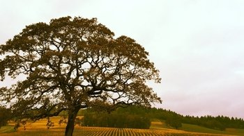 Private Group - Willamette Valley Wine Tour
