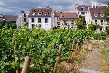 Paris Wine Cellars & VIP Montmartre Vineyard Tour & Tastings