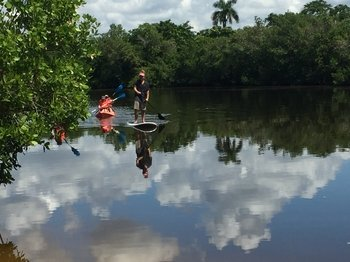 Naples Mangrove Tunnel Paddle board tour