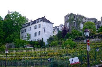 Art & Wine in Paris: Louvre, wine cellars and vineyard tour