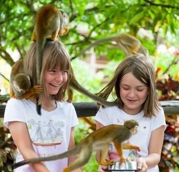 Monkeyland & Plantation Safari