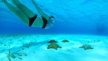 Cozumel Reef Adventure with Snorkeling