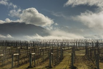 Exclusive Central Otago Wine Tour from Queenstown