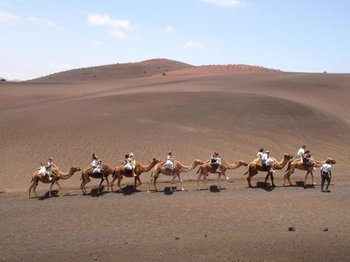 Camel ride safari in Timanfaya