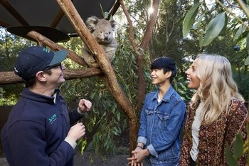 Australian Wildlife Experience at Healesville Sanctuary