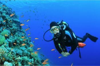 Scuba Diving Experience for Beginners