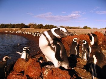 Penguins Colony at Punta Tombo Tour