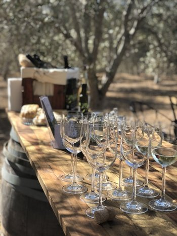 Private Hunter Valley Boutique Wine Tour in Mercedes Benz