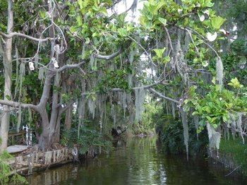 One Hour Sunset Cruise of the Chain of Lakes Winter Haven