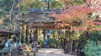 Self Guided 2-Day Autumn Tottori Tour with Chizu Town Visit