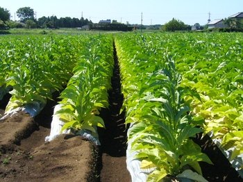 Full-Day Tobacco Route Sightseeing Tour