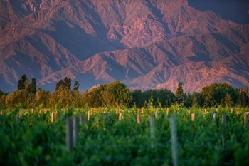 Cafayate Wine Route Tour & Tasting