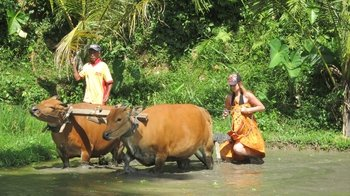 Private Full Day Bali Countryside Experience Tour