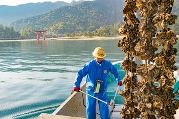 Hiroshima Enjoy an Oyster Harvest with Fishermen on the Boat