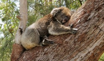 Yanchep National Park & Crystal Cave Tour