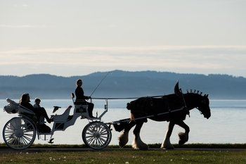 Private GRAND Horse-Drawn Carriage Tour of Victoria