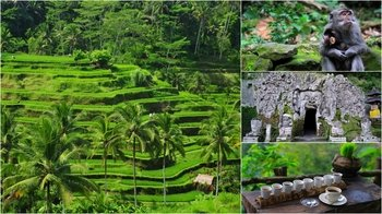Full-Day Private Tour The Beauty of Ubud