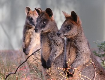 Canberra: Small Group Wildlife and E-bike Ride Tour