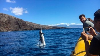 6 Hour Lanai Snorkel & Dolphin Watch Tour