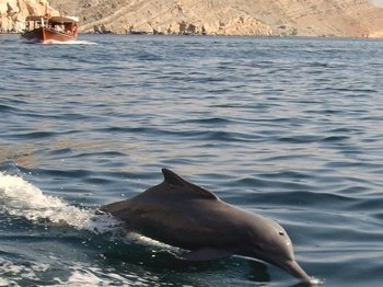 Dolphin Watch (2hours): Muscat Tours