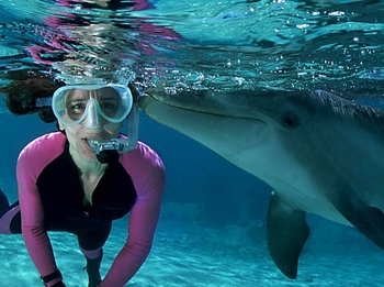 Dolphin watching +Snorkeling Combined tour