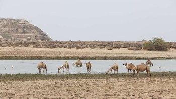 Splendours of the East: Salalah Tours