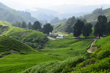 "Cameron Highlands ""Garden of Nature"" Full Day Tour"