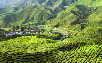 Cameron Highland Day Tour from Kuala Lumpur