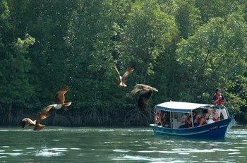 Langkawi Mangrove Forest and Cave Exploring Tour