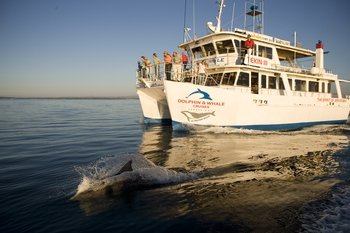 Jervis Bay Dolphin Cruise- 1.5 hr