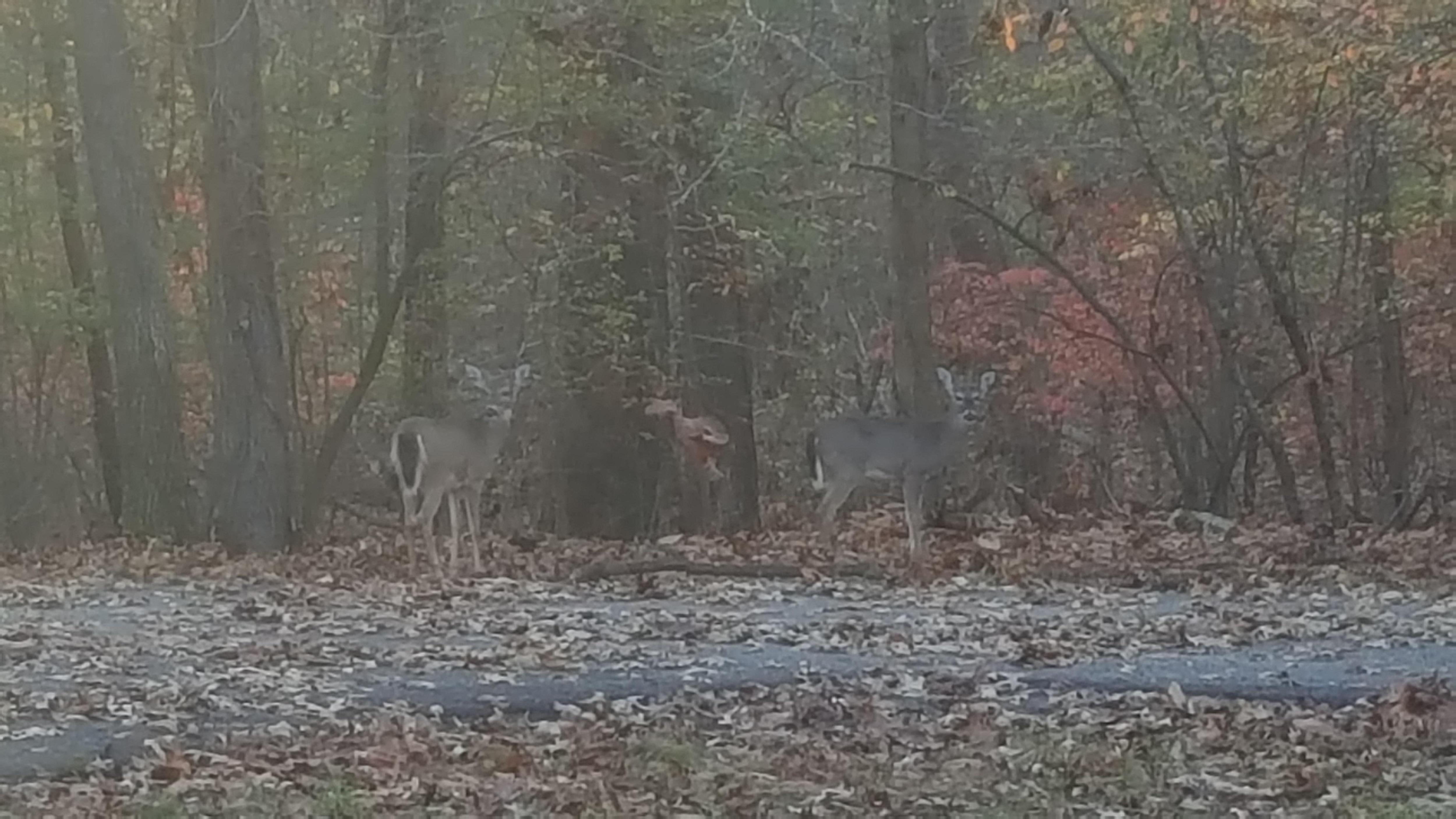 Eairly morning visitors