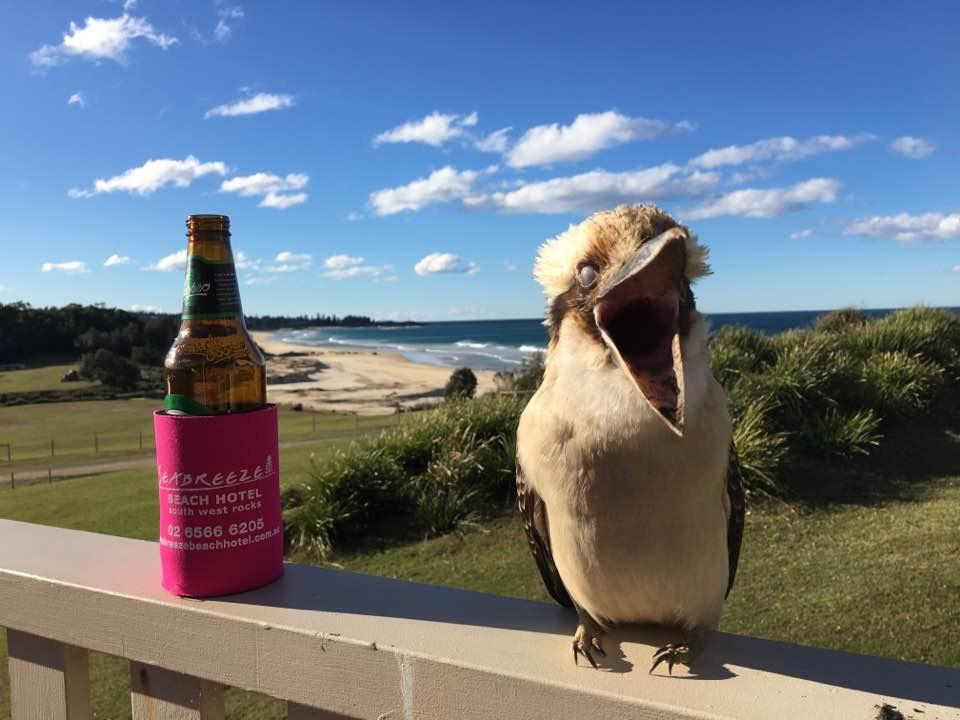 Sharing a beer and some laughs with a local