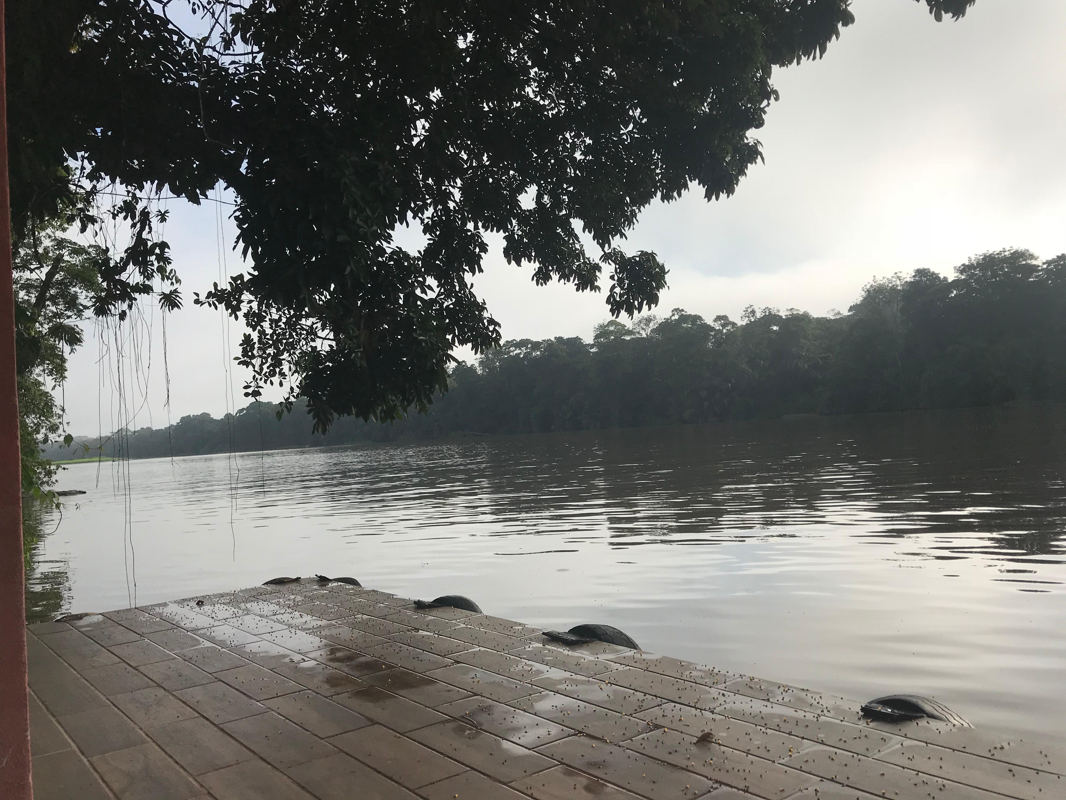Set Bagno Rana : Rana roja lodge tortuguero hotelbewertungen expedia