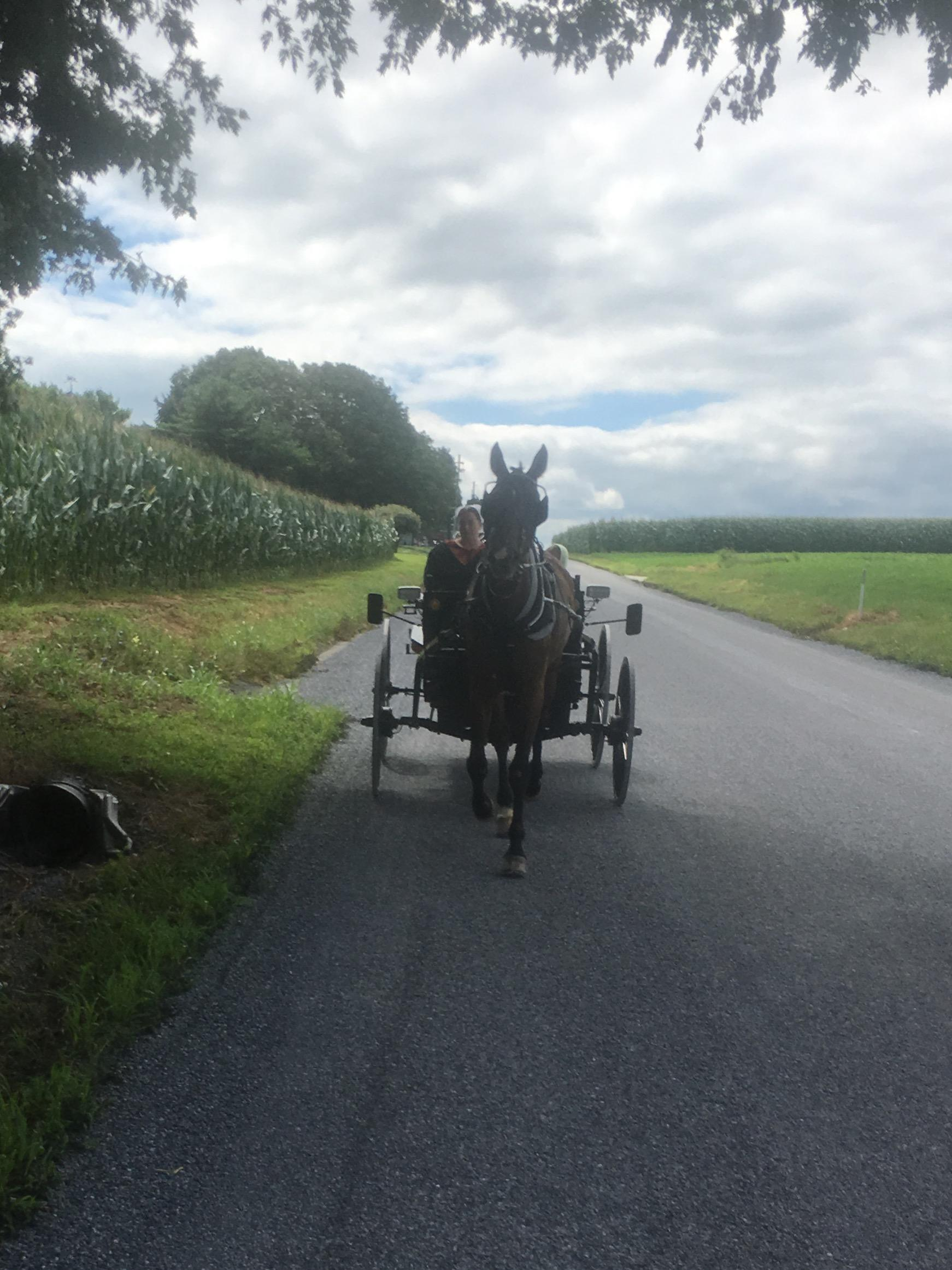 View from Horse and Buggy Ride