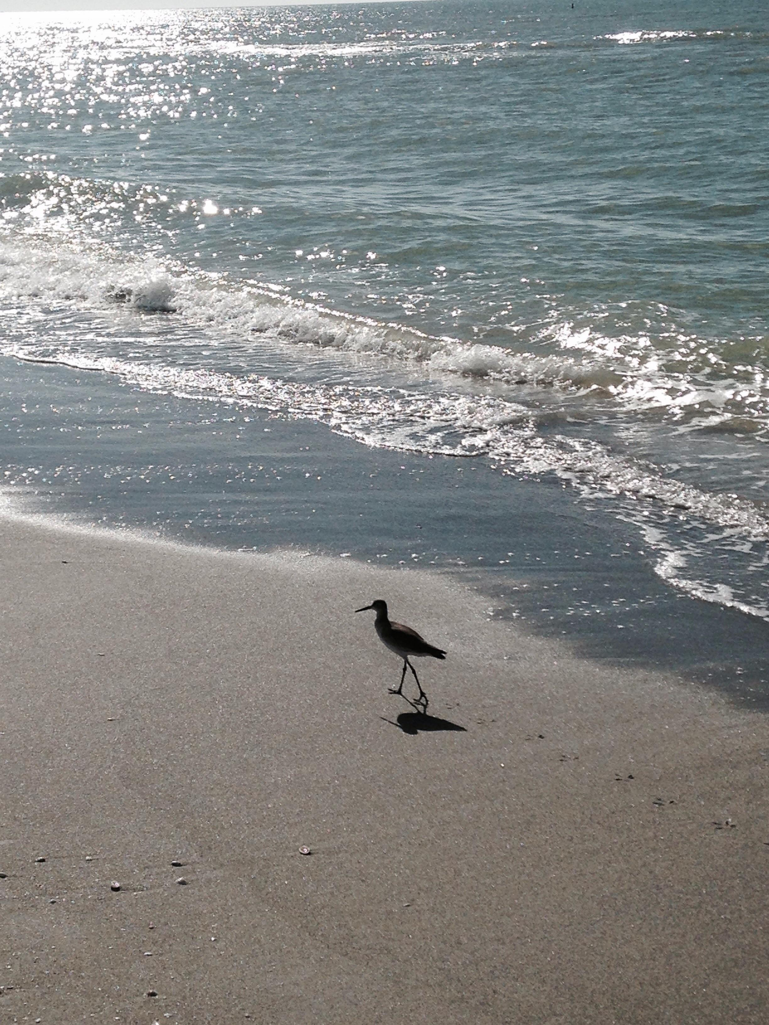 Sweet little bird, chasing waves