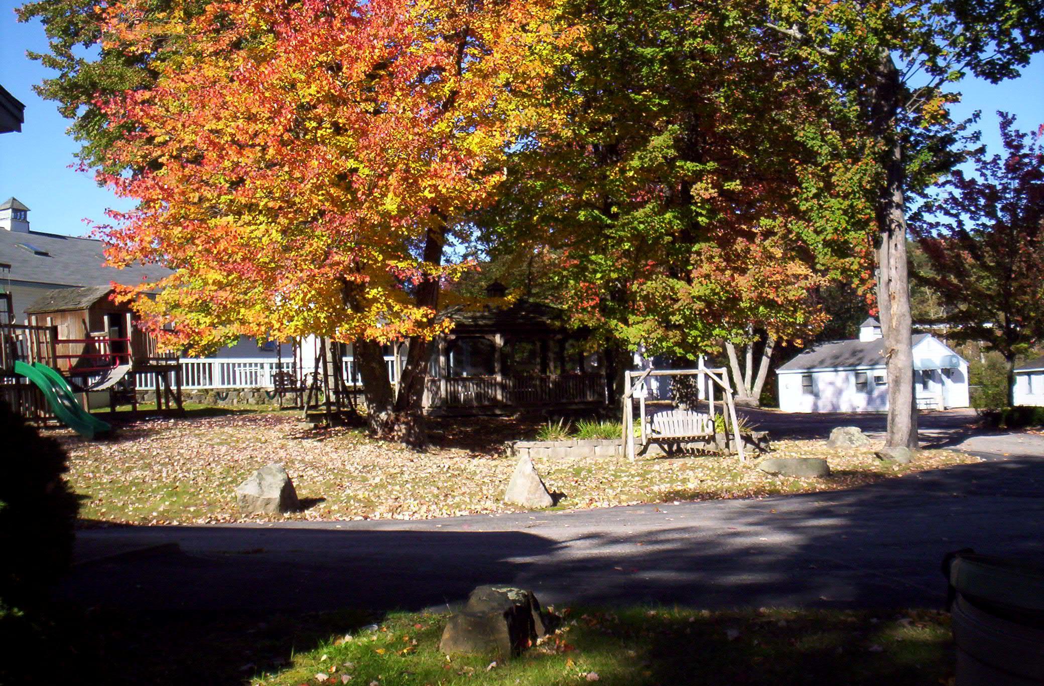 Scenic Backyard