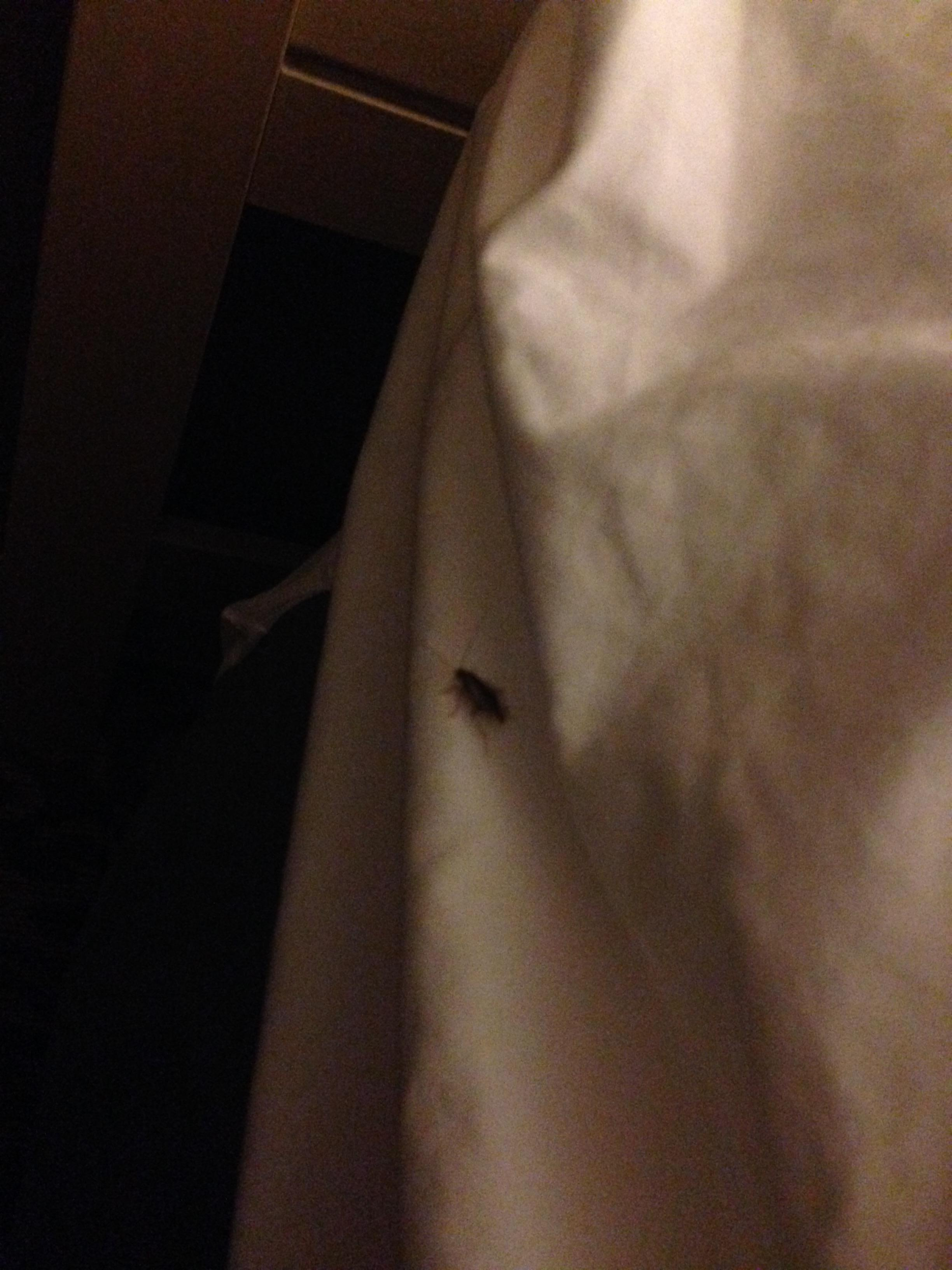 This one was on my bed