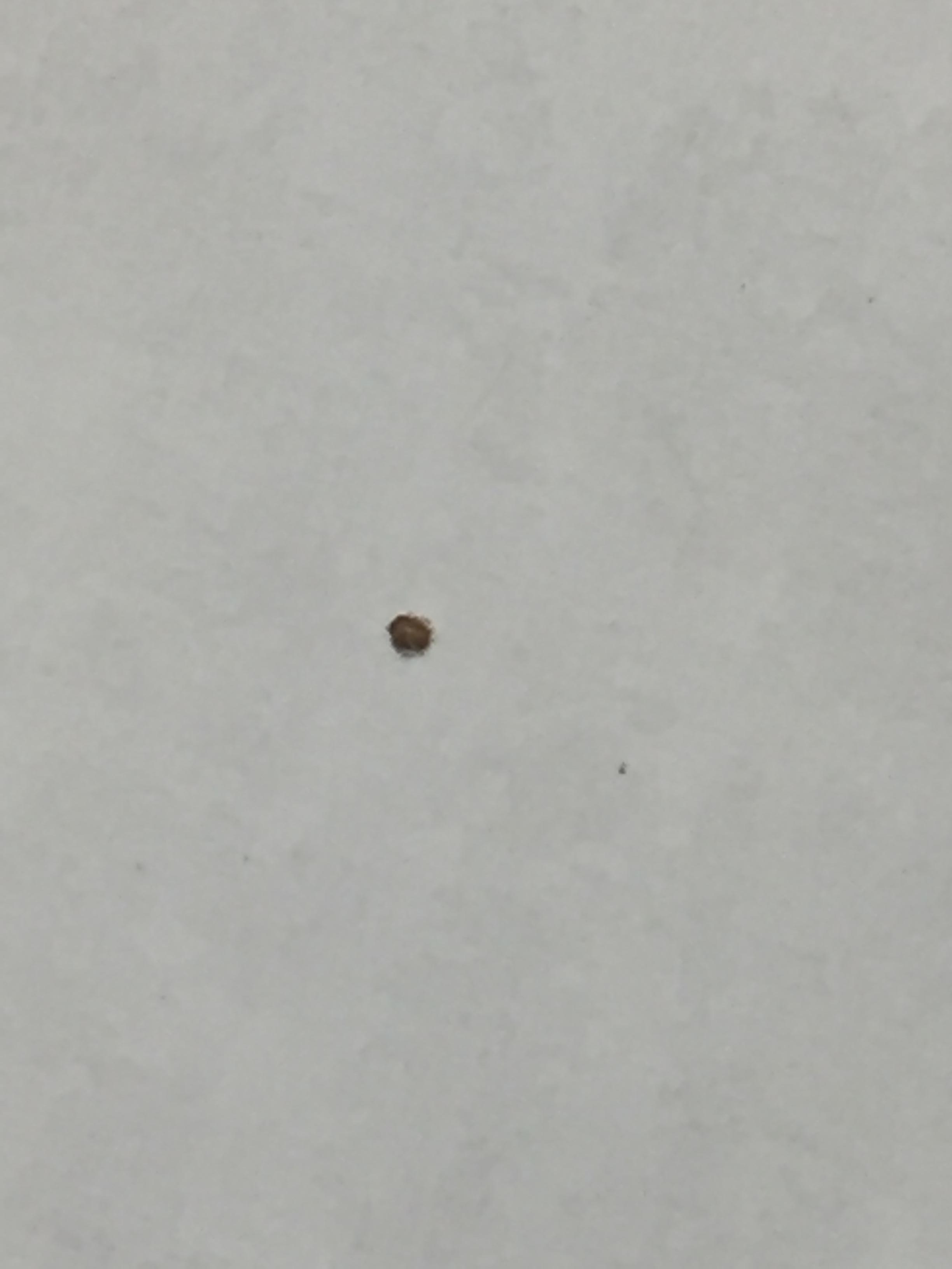 Found in bed. Not sure what it was