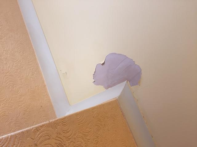 More paint peeling off the ceiling