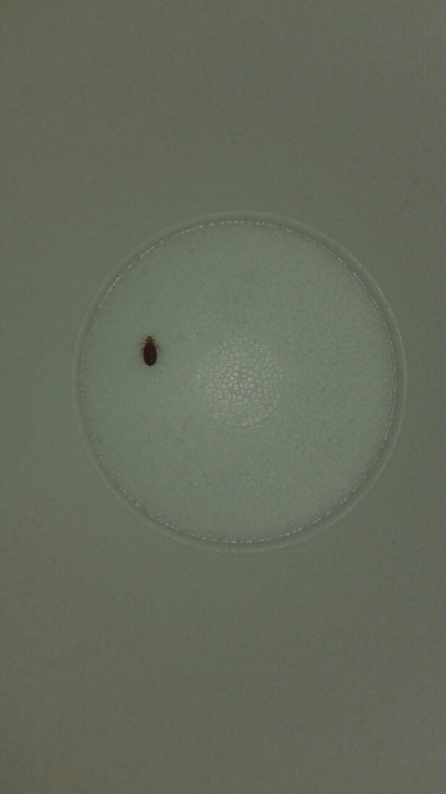 This is the bed bugs