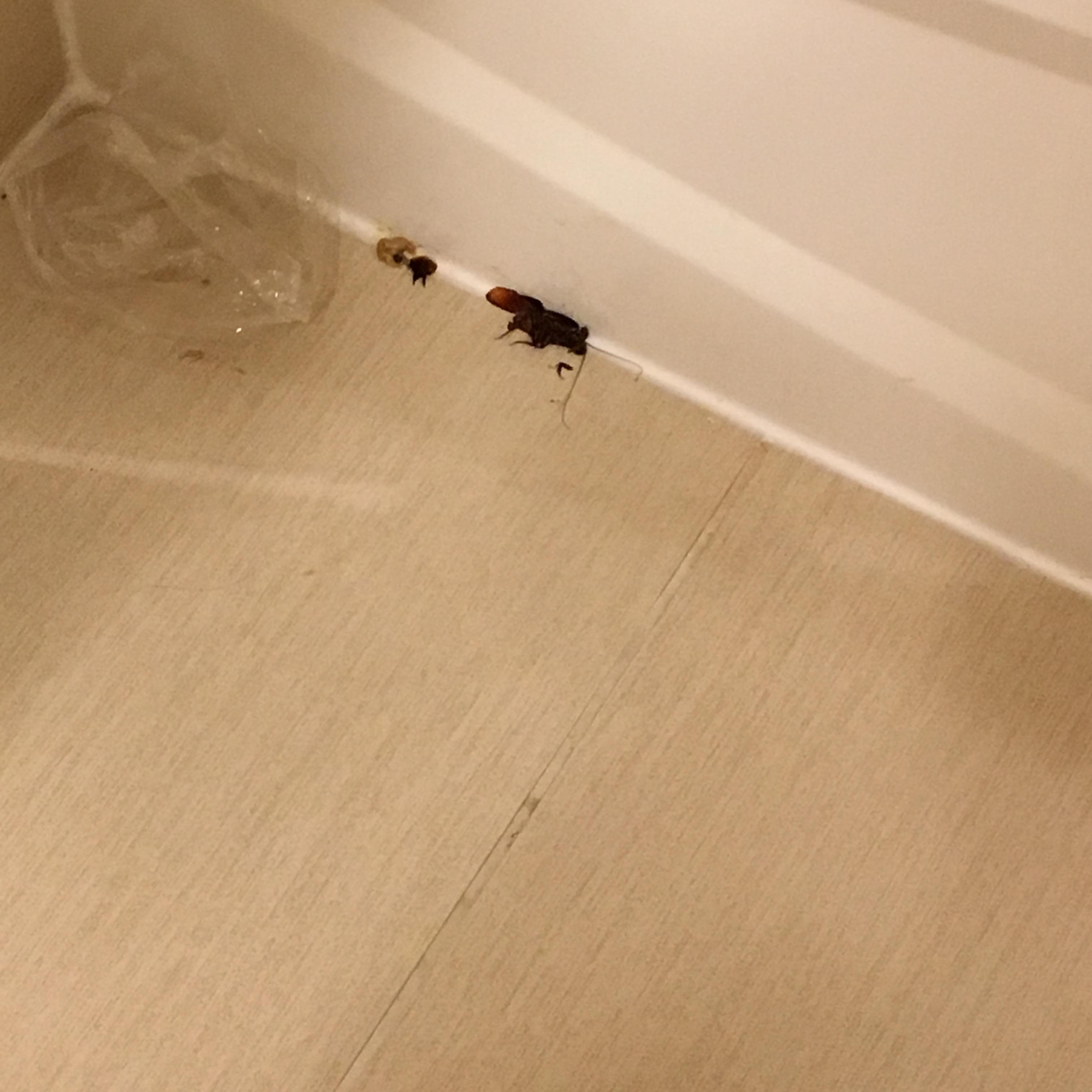 cockroaches In the restroom