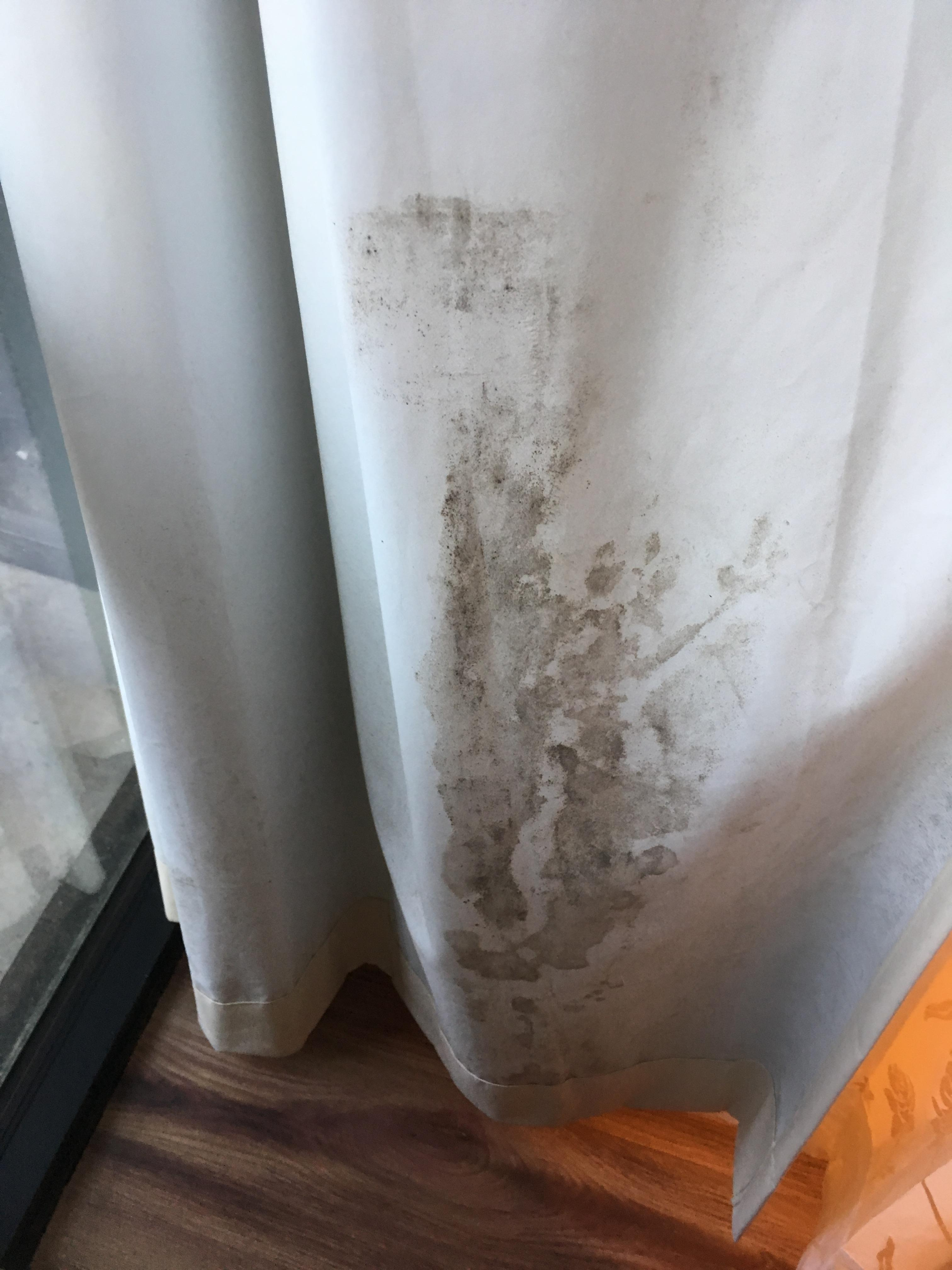 moldy window curtain