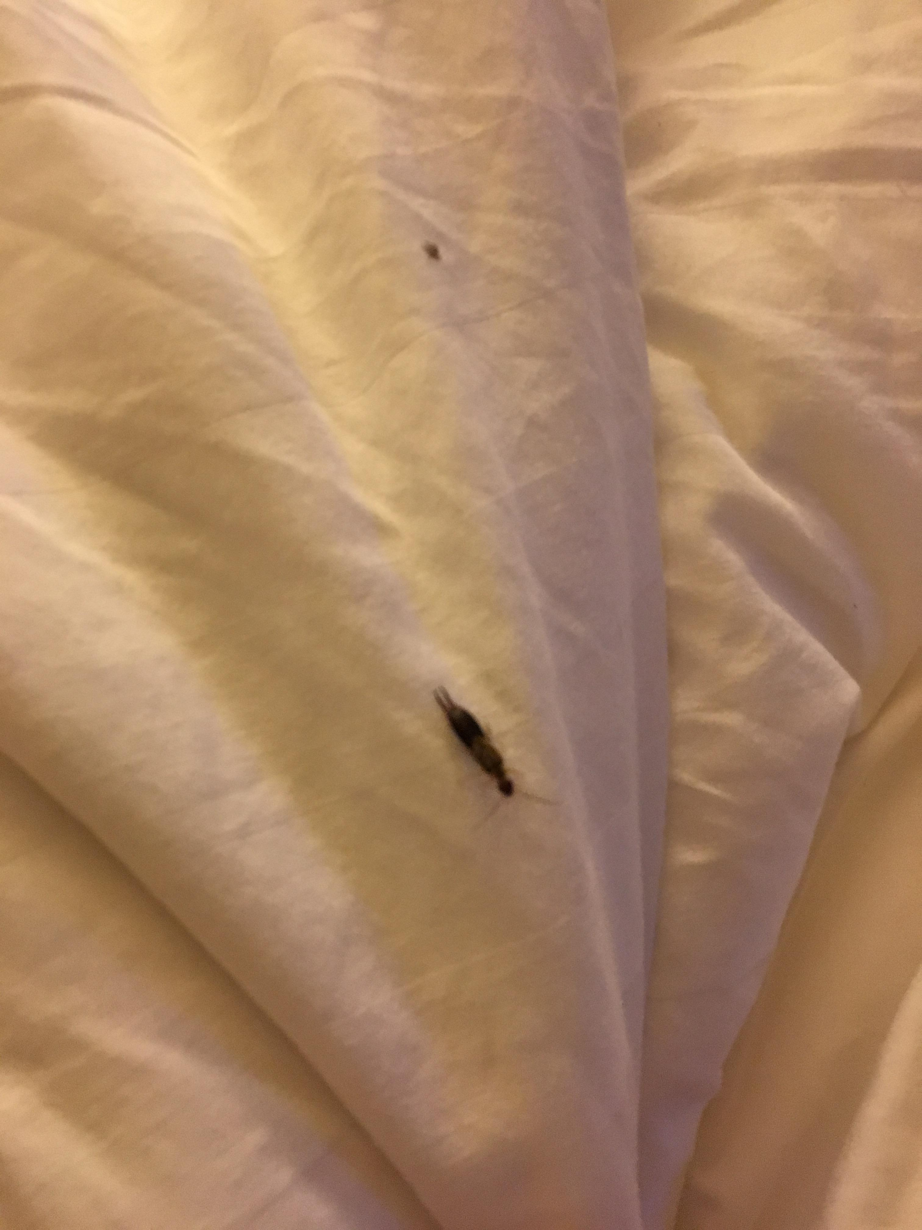 Bug in my bed