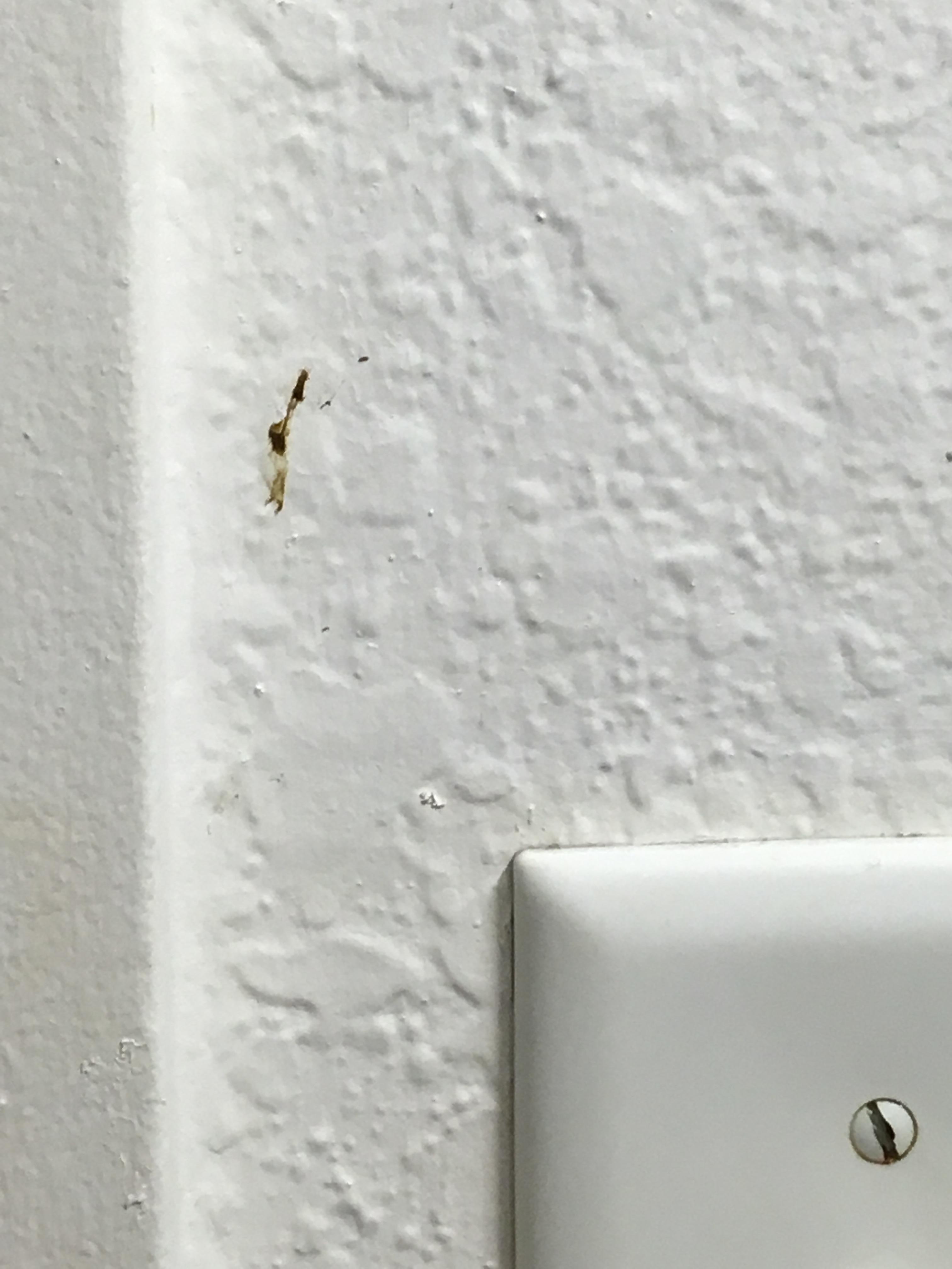 Moldy shower head