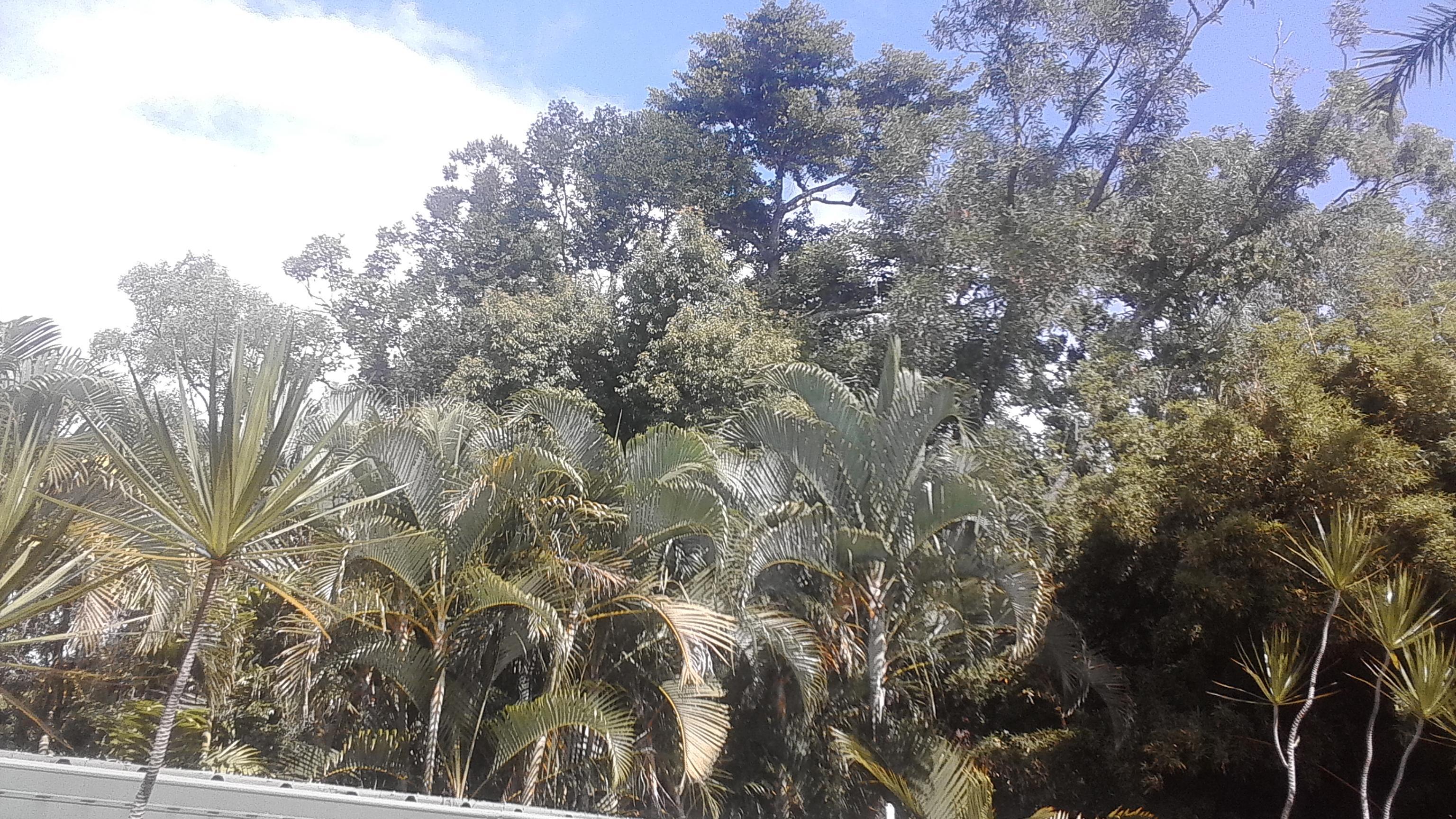 Kipara Tropical Rainforest Retreat Deals & Reviews (Airlie