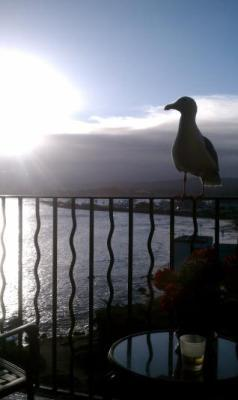 View at Sunrise. Bring binoculars!